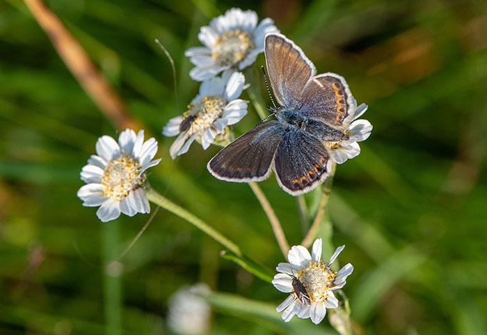 Biodiversiteit in Natura2000